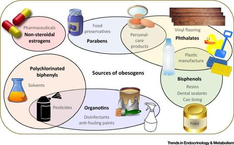 #trendsinendocrinologyandmetabolism #perturbateursendocriniens #obésité Perturbateurs endocriniens obésogènes : identifier les lacunes en termes de connaissance