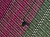 [PHOTOGRAPHIES] champs tulipes ciel Hegen
