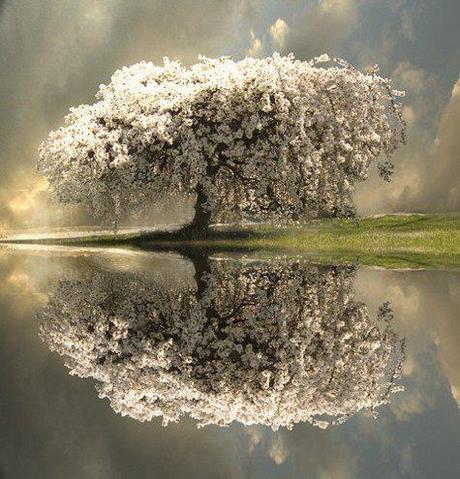 L'arbre du calme.