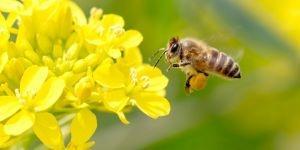 #AVAAZ - #Ecologie - 13 pays tuent le plan de sauvetage des abeilles !