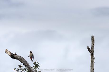 figer-mouvement-oiseau