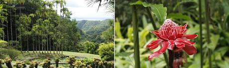 Nos incontournables de la Martinique