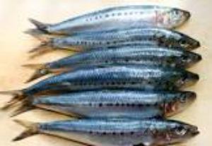Taboulé de sardines aux petits oignons grelots