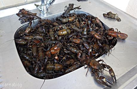 La pêche des écrevisses aux appâts spéciaux
