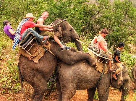 Sa balader à dos d'éléphant n'est pas commun...