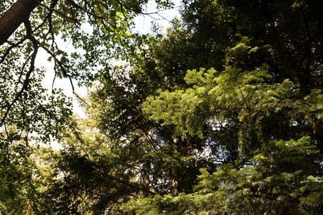 Intermède sous les arbres