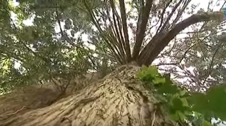 L'arboretum national des Barres va être fermé