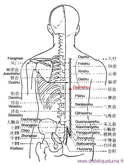 Le point Gan Shu du méridien de la vessie (18V)