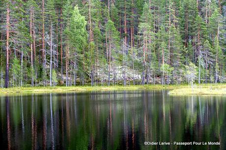 FINLANDE : A L'AFFÛT DES GRANDS PREDATEURS