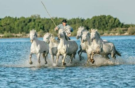 Le quatrième plus beau paysage de France: La Camargue