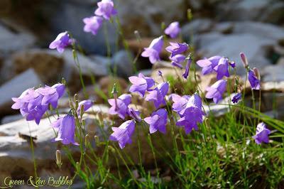 L'herbier de la montagne de Lure