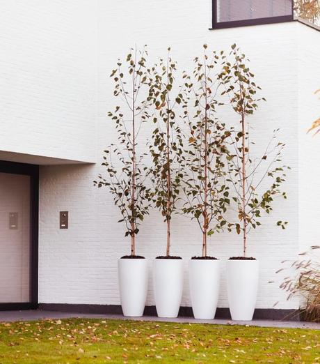 elho pot plante geant rond arbre lumineux avis blog déco clemaroundthecorner