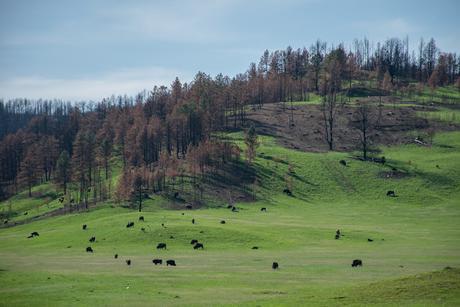 Le Mont Rushmore et Custer State Park [Traversée USA]