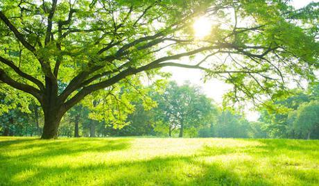 Auprès de mon arbre... (1)