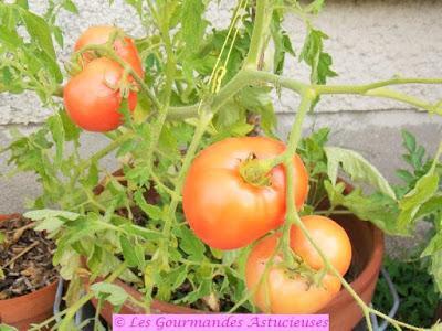 Salade de tomates aux bulbilles d'ail et aux graines de Persil (Vegan)