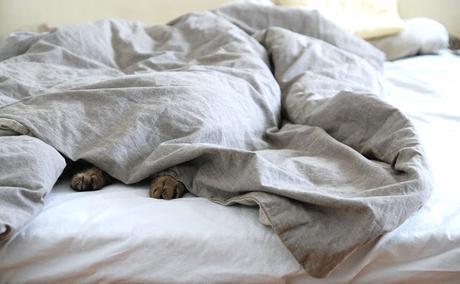 Sur l'oreiller avec... une fille dans le bois
