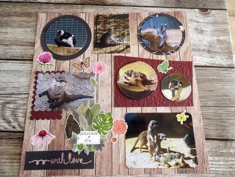 Album zoo de la Palmyre : les lémuriens et cie