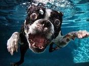 Photographie série aquatique Seth Casteel