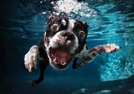 Photographie : La série aquatique de Seth Casteel