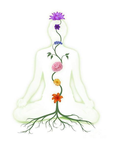 représentation des 7 chakra sur le corps humain