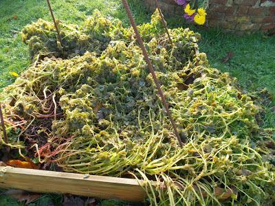 22 plantes pour produire de la biomasse