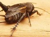 Insecte identifié