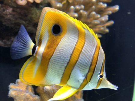Aquarium et musée océanographique de Monaco