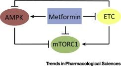 #trendsinpharmacologicalsciences #cancer #metformine Metformine comme agent anticancéreux
