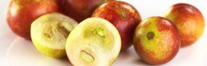 Camu camu, le fruit qui lutte contre l'obésité