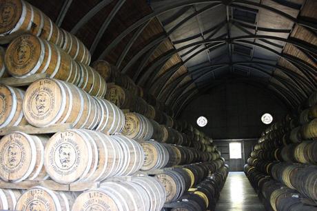 distillerie_clement_martnique_rhum_visite