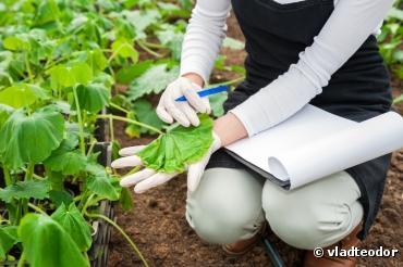 L'agriculture bio plus efficace que la conventionnelle contre les maladies des cultures