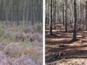 Glyphosate miel forêt landaise contaminé être jeté