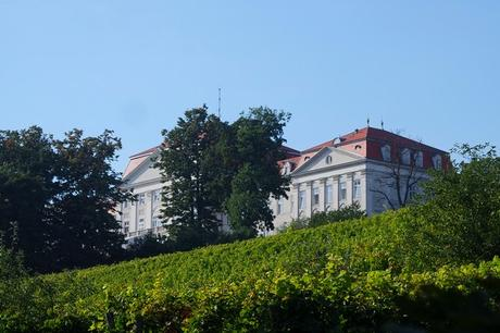 vienne weinwandertag randonnée vignes ottakring schloss château wilhelminenberg