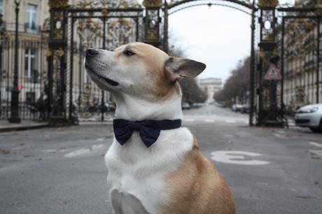Ton chat ou ton chien n'est pas encore sur Instagram ? Voici les conseils d'un pro, My Pet Agency