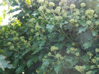 L'arbre, une réserve de nourriture pour les insectes pollinisateurs