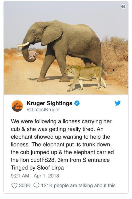 [Hoax] L'éléphant el le lionceau