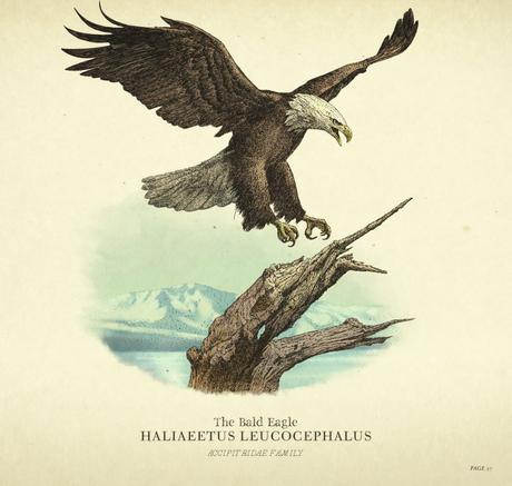 Guide Les Animaux dans Red Dead Redemption Chasse et pêche bald eagle