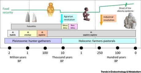 #trendsinendocrinologyandmetabolism #obésité #évolution Epidémie d'Obésité: Perspective Evolutionnaire