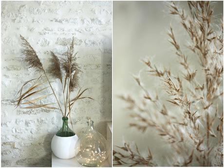 Fleurs et plantes séchées : la nouvelle tendance déco
