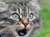 Connaissez-vous l'origine votre chat
