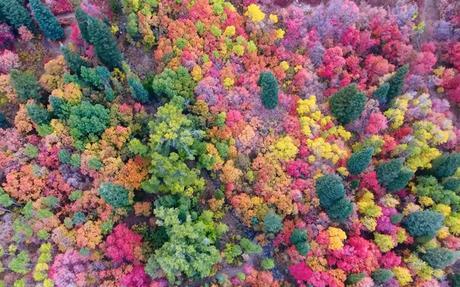 Ce drone capture les superbes couleurs d'automne des forets de l'Utah