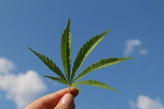 Enjeux du cannabis au travail - 2