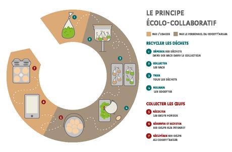 Cocott'arium : appui commercial pour les « poulaillers urbains »