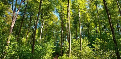 Comment se crée une forêt ?