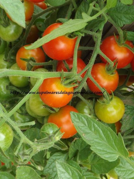Pates à l'ail aux tomates cerises du jardin IG Bas Végan