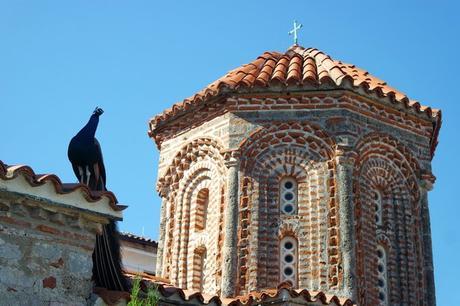 macédoine ohrid monastère saint naum paon