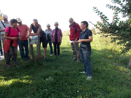 Retour sur la balade découverte des plantes sauvages comestibles à Vendin
