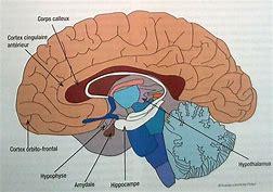 Procrastination - le cerveau en question