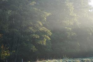 Le presque automne et ses récits d'entrelacements