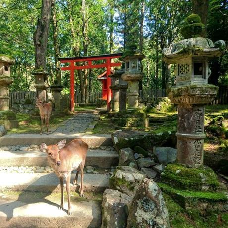 [Voyage] Le Japonisme nous emmène dans une soirée Nara Kansai !